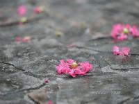 夏の終わりのピンク - 瞳の記憶
