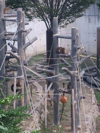 猿と月 - yamatoのひとりごと
