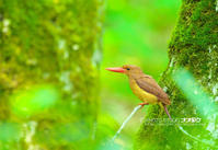 秘密基地より - 野鳥大好き写真館|オオタケカメラ