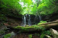 上山高原にて~猿壺の滝~ - 但馬・写真日和