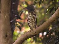 一休み - Wild Birding