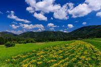 夏の花畑2019女郎花咲く棚田(右京区越畑) - 花景色-K.W.C. PhotoBlog