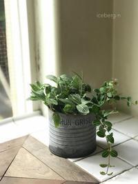 プチちょこっとの寄せ植え - 小さな庭 2