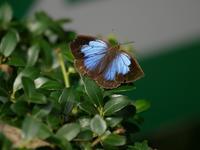 蝶と蛾と蝉 - 花と葉っぱ