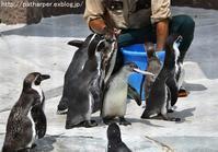 2019年8月天王寺動物園その2 - ハープの徒然草