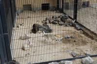 初めましてミーアキャットの赤ちゃん - 動物園に嵌り中2