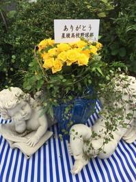 イキなお花屋さん - お花に囲まれて