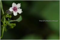 花は可憐だと思うのに - ルリビタキの気まぐれPATA*PATA