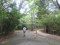 夏休みの散歩写真 - yamatoのひとりごと