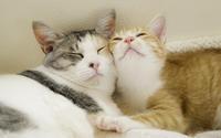 ツーショット思い出編(プナ・チャル) - 猫と夕焼け