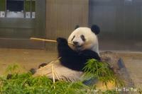 真夏の夜の動物園~パンダ観覧~ -  Toi Toi Toi ~しあわせのおまじない~