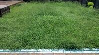 クラピアが雑草ジャングルに - うちの庭の備忘録 green's garden