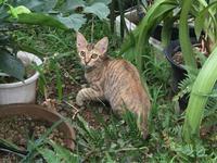 隣の庭で寝てた 子猫の薄茶ちゃん - Lucky★Dip666-Ⅳ