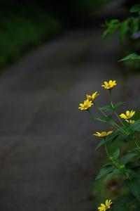 「道端に咲く花よ」 - 光と彩に、あいに。