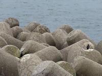 処暑の海 - 清治の花便り