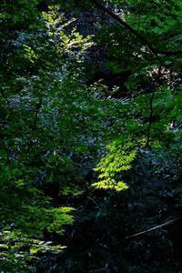 木漏れ日に映える緑色 - ぶらり散歩 ~四季折々フォト日記~