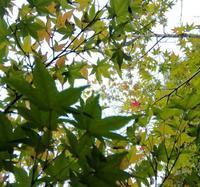 秋色秋味… - 侘助つれづれ