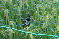 ■ネットの中のトンボ 3種19.8.25(オオシオカラトンボ、ギンヤンマ、オニヤンマ) - 舞岡公園の自然2