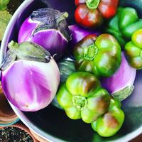 我が家の菜園日記n.34 ~夏の収穫はビタミンカラー♪ - 幸せなシチリアの食卓、時々旅
