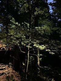 ものの怪達との宴 - 木洩れ日の森から
