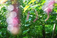 夏の終わりの野草園~② - 柳に雪折れなし!Ⅱ