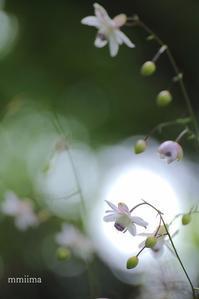 神秘の光 - マイ・ライフ