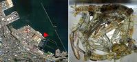 2019・8・26小樽港勝納埠頭のシャコ釣り13:30〜17:30 - たどり着いたら、いつもチカ釣り
