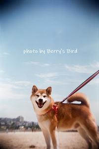 口 角 - Berry's Bird