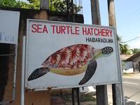 2019スリランカ旅行10ウミガメ保護センター、M・ウィクラマシンハ民族博物館、Handunugoda Tea Estate、昼食 - わたしの毎日