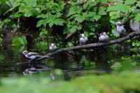 し・ま・え・な・が。 - 季節の野鳥~Wildbirds archives