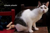 猫と椅子 - 今が一番