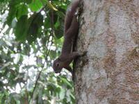 ヒヨケザルに会いに行こう!Bukit Timah Nature Reserveへ。 - よく飲むオバチャン☆本日のメニュー