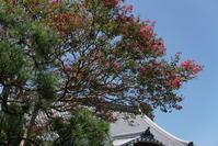 8.25 本覚寺 - 週末はソニーα6500でぶらり鎌倉・湘南散歩!