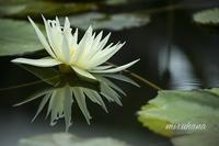 水鏡。 - MIRU'S PHOTO