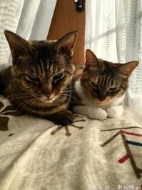 今朝の猫らと、おニューのBAG。 - あの日、あの味。
