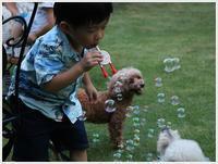 孫たちの、大分5泊6日の夏休みその62号君と大の楽しそうな顔、人間と犬を超えてるよ~\(>∀ - さくらおばちゃんの趣味悠遊