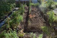 自然栽培大根人参の種蒔き庭の畝 - 自然栽培 釧路日記