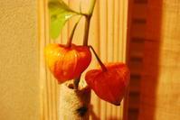 鬼灯 - 懐石椿亭 公式weblog北陸富山の懐石料理屋