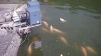 小西養鯉場&小西米プロジェクトTheOdyssey2020-19鯉の里は米の郷 - 鯉の里は、米の郷