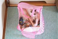 ウチの猫のイメージCM - きょうだい猫と仲良し暮らし