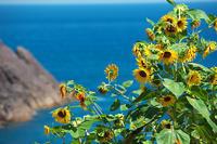 夏の終わり・海 - 但馬・写真日和