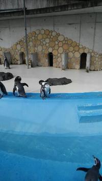 桐生が岡動物園へGO - 占い師 鈴木あろはのブログ