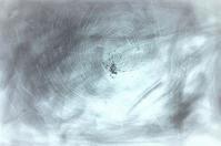 《黄金蜘蛛》 - 『ヤマセミの谿から・・・ある谷の記憶と追想』
