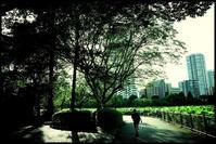 不忍池 -9 - Camellia-shige Gallery 2