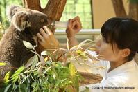コアラと緑のジュース ~その3 桜花ちゃんのマッサージ - こらくふぁーむ