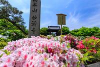 ツツジに包まれる妙満寺 - 花景色-K.W.C. PhotoBlog