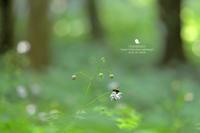 小さな願い - お花びより