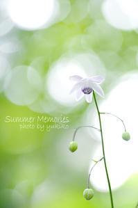 短い夏の思い出 - 焦点を合わせて out of focus