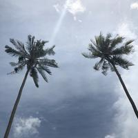 子連れサムイ島2泊3日④コーラル島(タン島)でシュノーケリング - イロトリドリノ暮らし