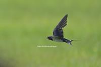 真夏の草原に飛ぶ黒い奴 - Olive Drab